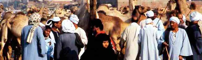 Visita al mercado de camellos en Birqash