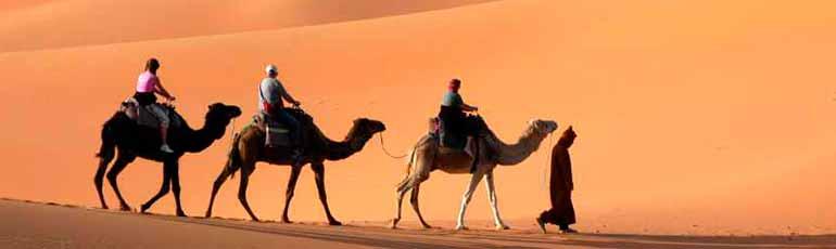 Tour a caballo o camello por las pirámides de Egipto
